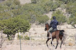 After the vet check, a rider heads out on another 20-mile loop through the Caja del Rio