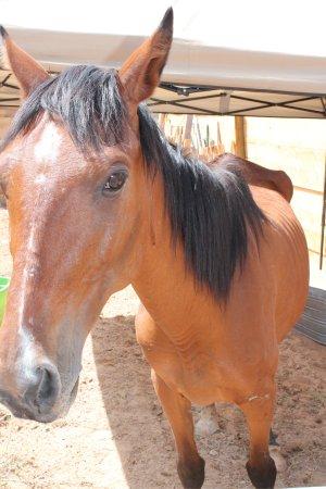 horse_mom300x450