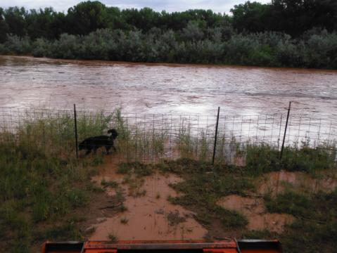The deluged increased the flow in the Rio Chama at Tierra Azul from 50 cubic feet a second to more than 3,000 cfs, pushing the river above six-foot banks.